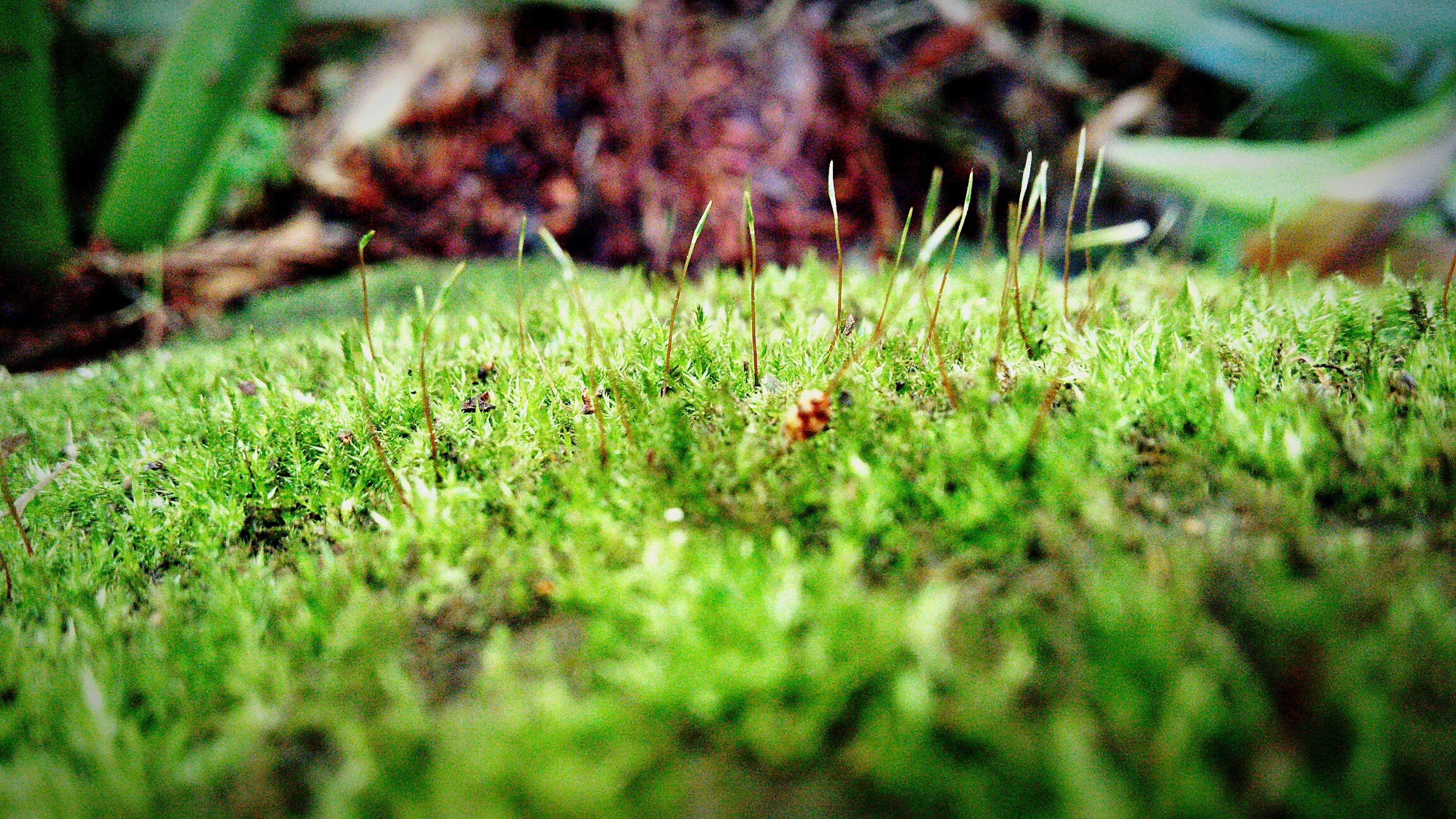 芽吹く A bud comes out. Hello World Moss Nagano