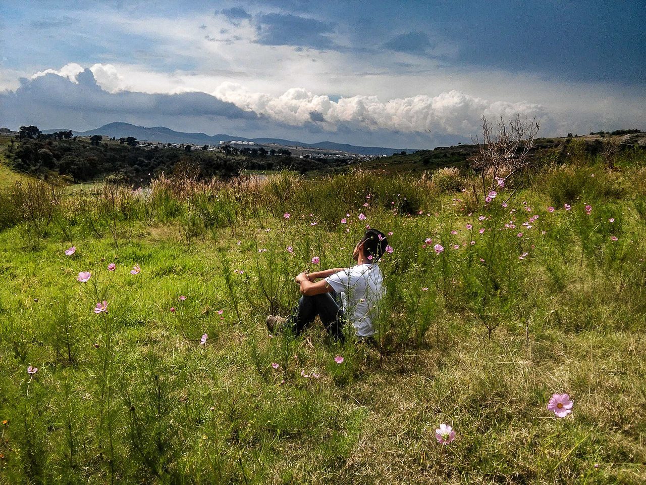 Full Length Side View Of Man Sitting Amidst Pink Flowers Against Sky