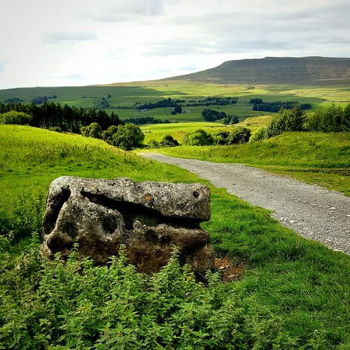 Yorkshire dales Landscape Field Grass Tranquil Scene Sky Tranquility Green Color Agriculture Rural Scene Scenics Nature Outdoors Day Horizon Over Land Countryside Non-urban Scene Yorkshire Dales Rock Formation Geology Dirt Road