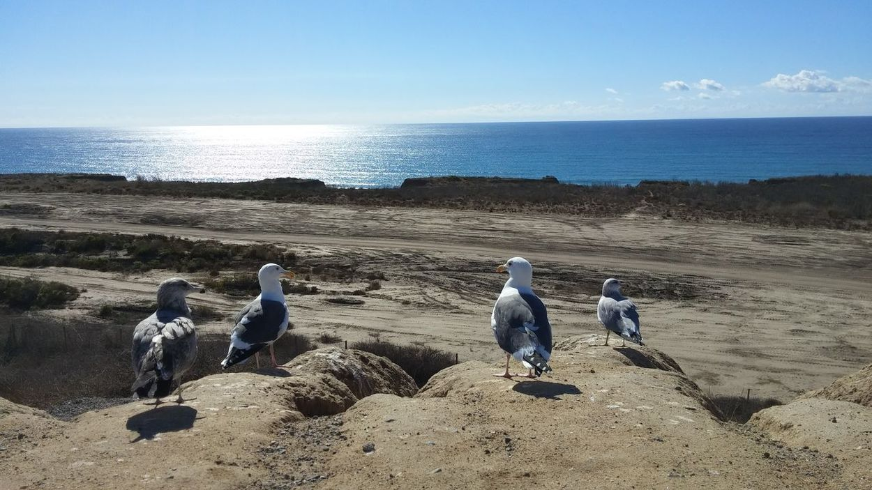 Watching the ocean with my winged friends... Sea Sunshine