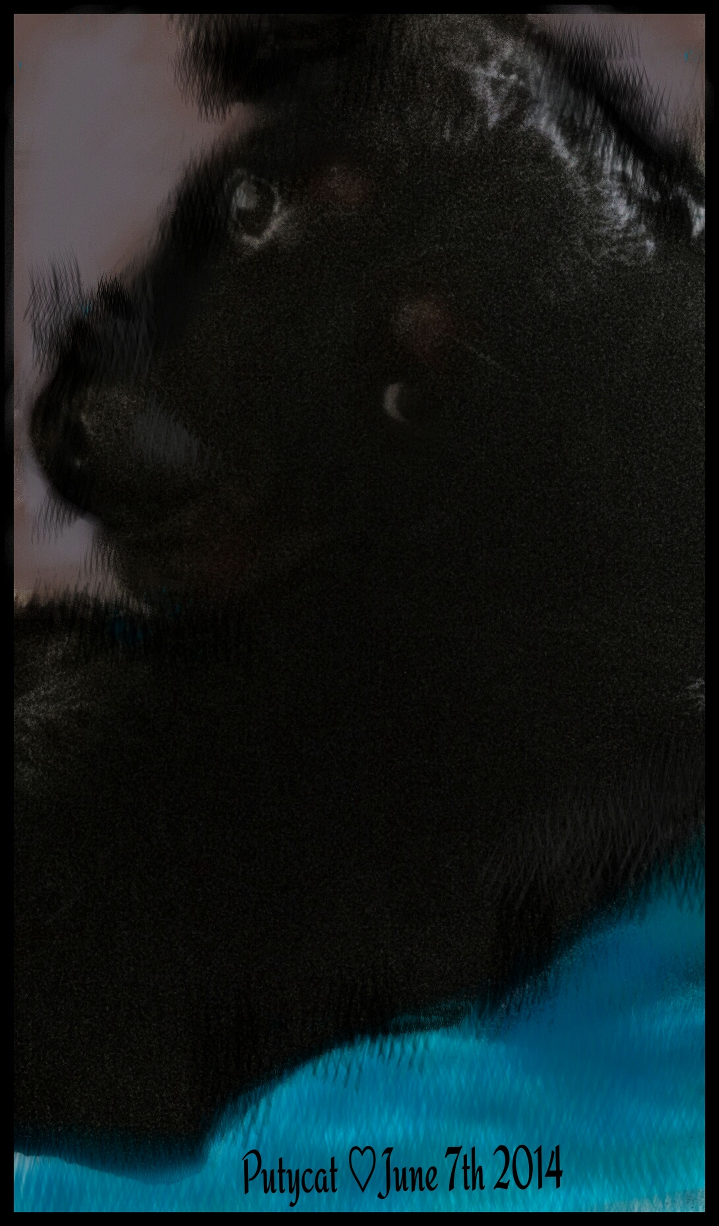 transfer print, auto post production filter, indoors, one animal, animal themes, pets, domestic animals, text, close-up, mammal, domestic cat, western script, cat, communication, relaxation, part of, one person, high angle view, black color