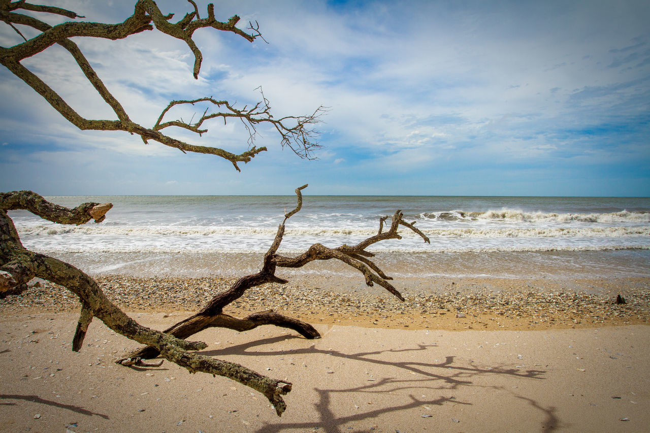 Driftwood Nature No People Ocean Sand Sea Shore Sky Tree Water
