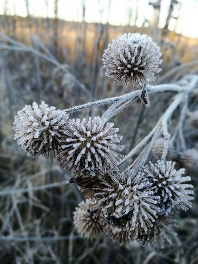 Winter Cold Temperature Snow Nature Frost Beauty In Nature Close-up Frozen No People Snowflake Plant Outdoors Dried Plant Day