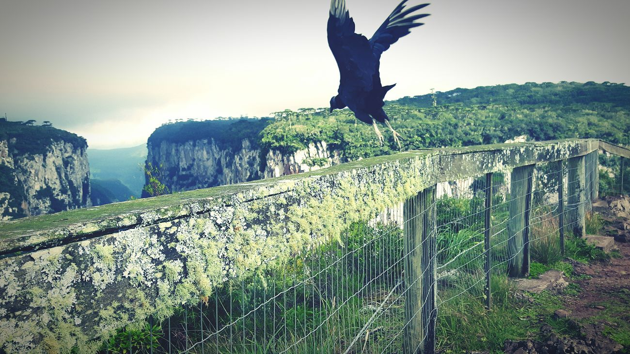 Nature Ave Corvo Canions Cambara Do Sul Exclusive  Montes Voo Voar Ecologic