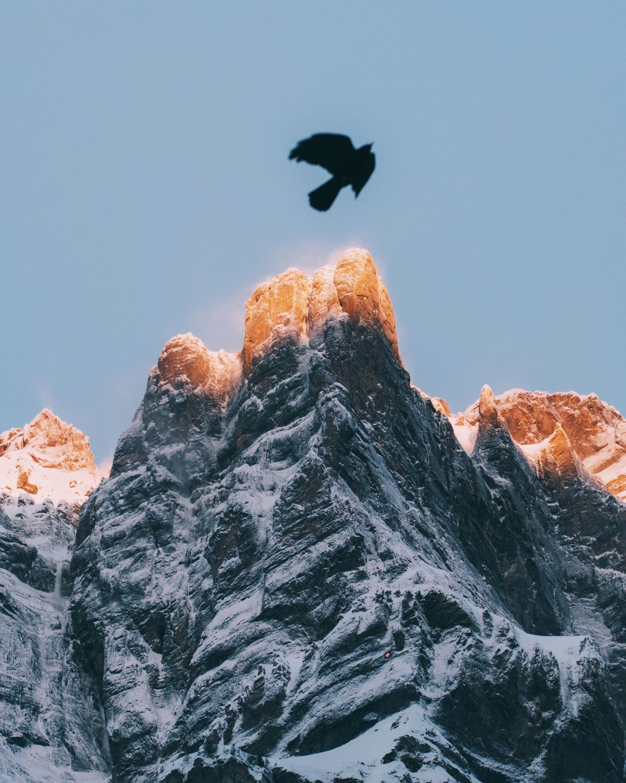 Snow Mountain Low Angle View Animals In The Wild Bird Nature Cold Temperature Rock - Object Clear Sky Mountain Range Day Physical Geography Outdoors Beauty In Nature No People Animal Themes Mountain Peak Scenics Rocky Mountains Winter Sunrise Light Rock Glow Morning