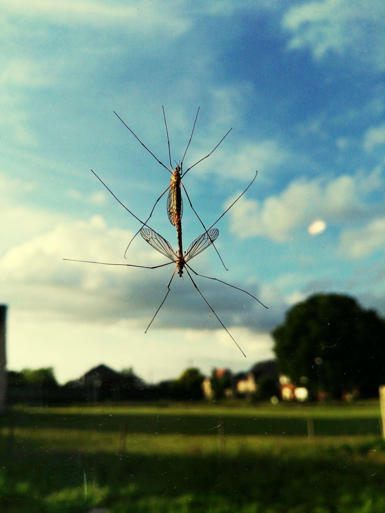 Thegoodlife Musquito Nature Macro