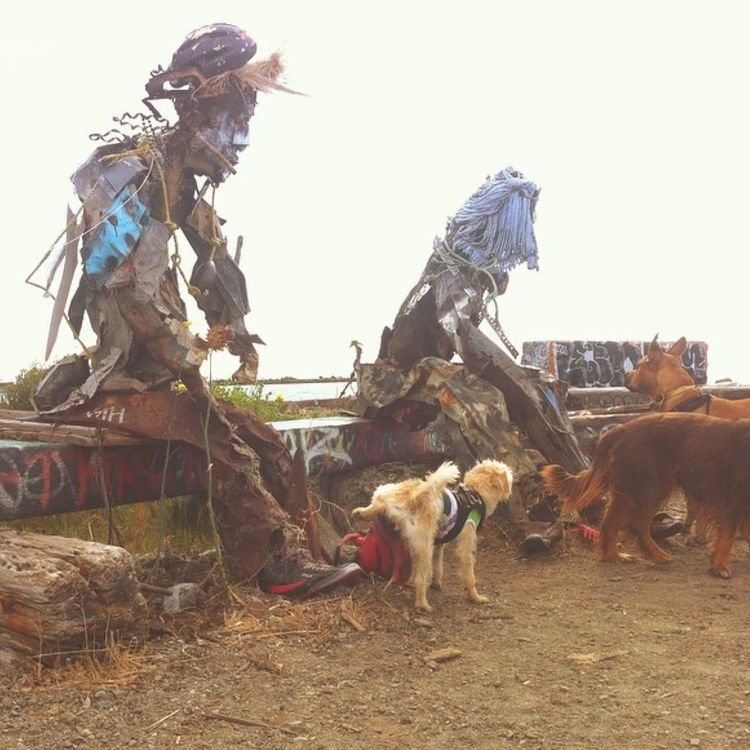 Bird Zoology Medium Group Of Animals Domestic Animals Wildlife Livestock Field Rooster Flying Day Person Outdoors Messy Avian Trash People San Francisco Adventure Travel Dog Model Journey Keoki Residential District Old Town