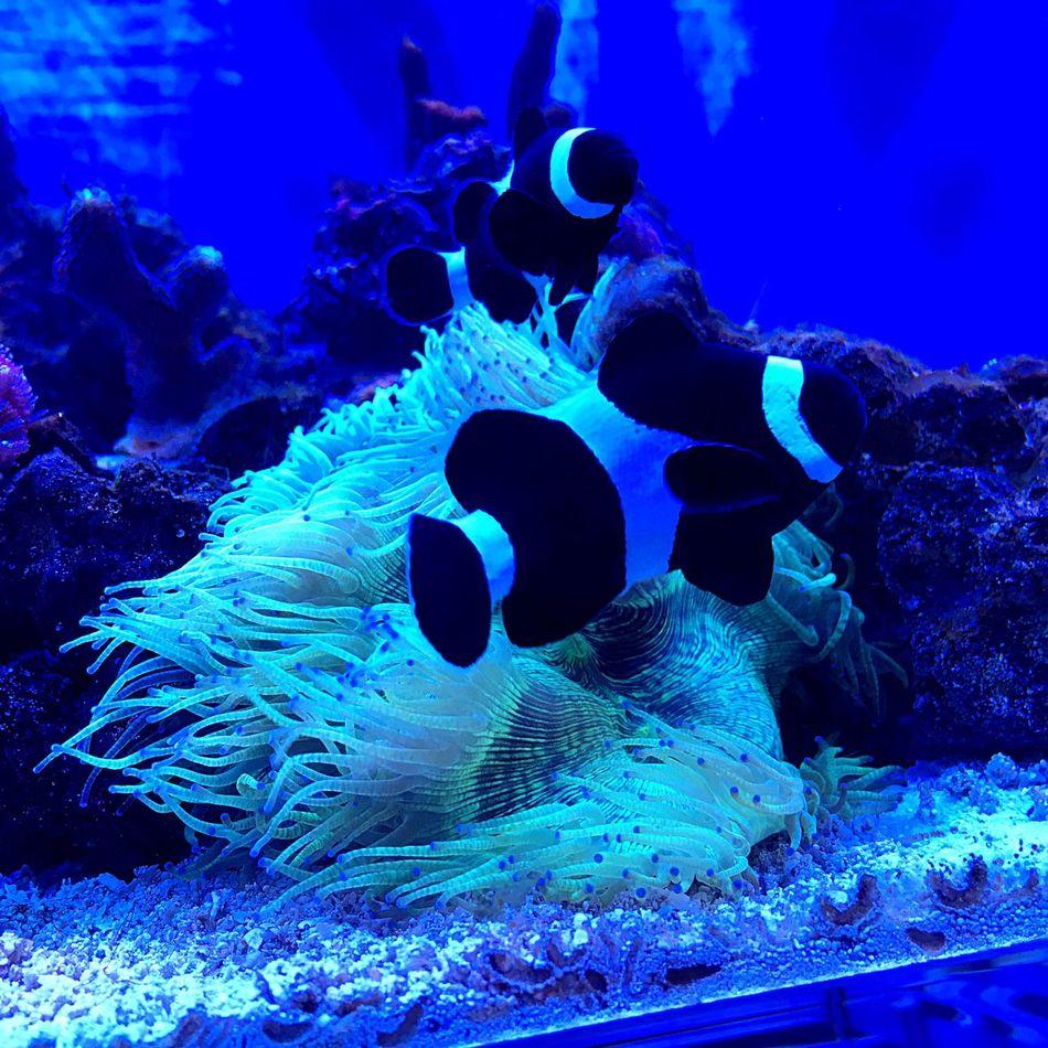 Fishing Acquarium Taking Photos Coralli Eyemphotography