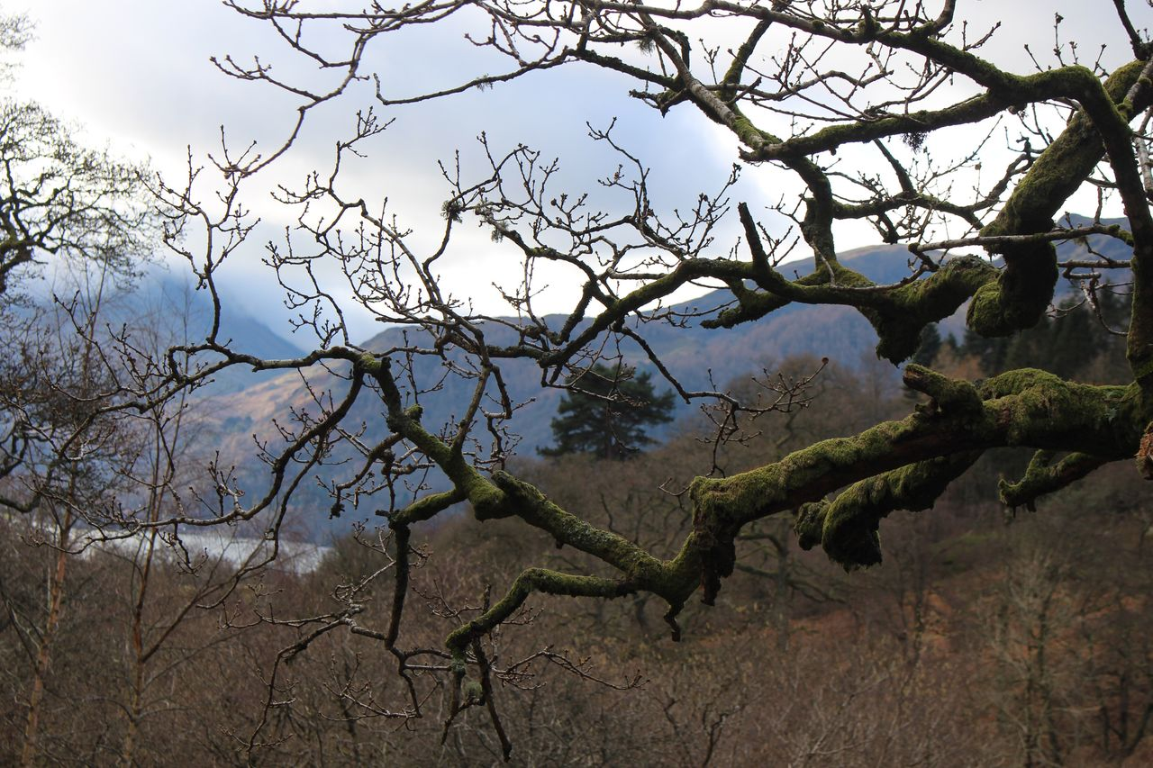 Lake District in winter Tree Branch Bare Tree Nature Outdoors No People Sky Landscape Beauty In Nature Day Hiking Countryside Lakedistrictnationalpark