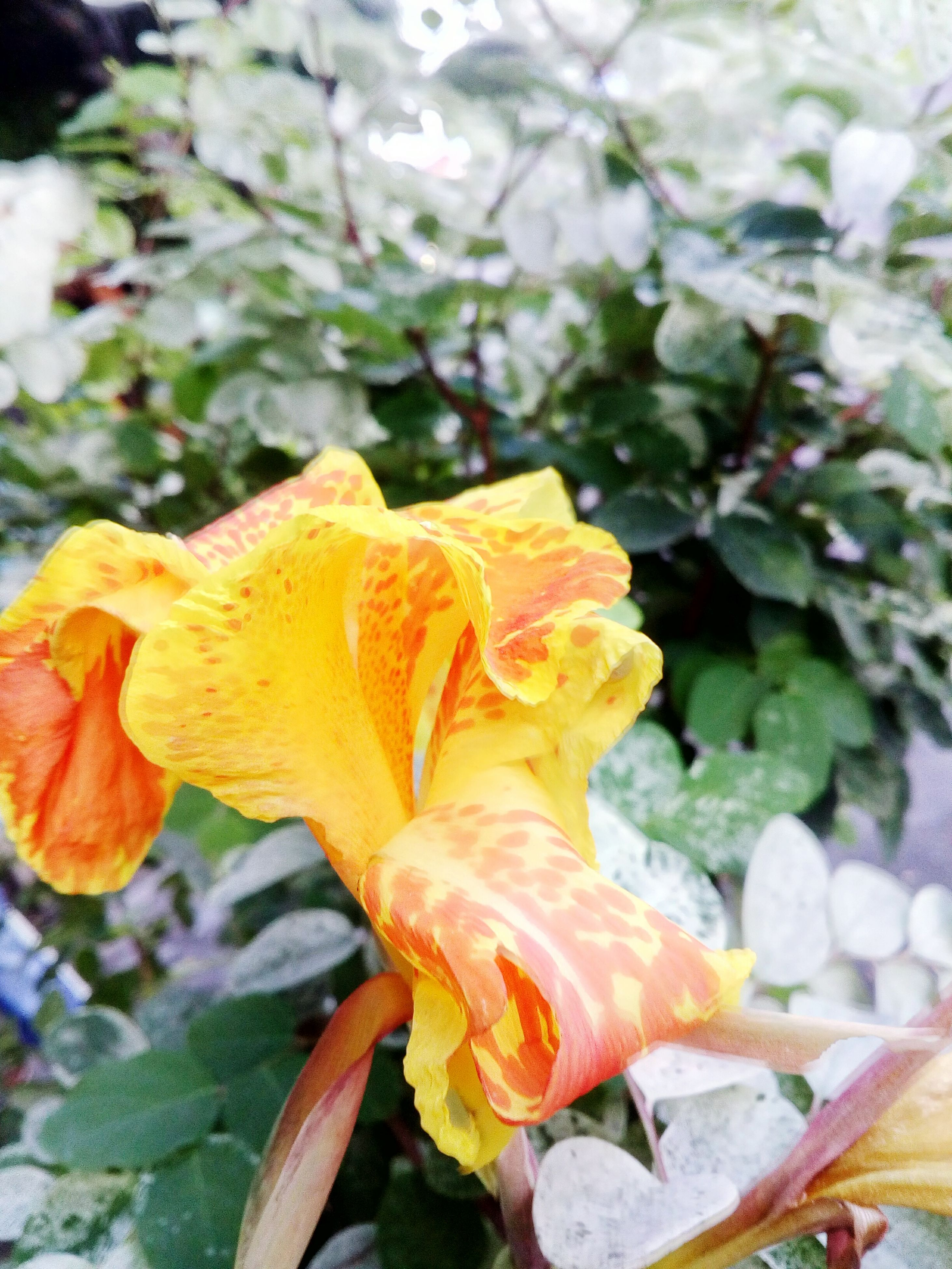 flower, petal, fragility, growth, beauty in nature, nature, plant, flower head, freshness, no people, blooming, outdoors, day, close-up, yellow, springtime, day lily