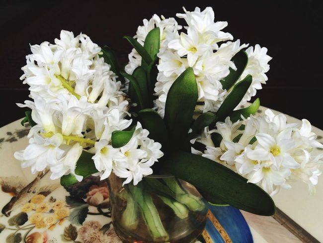 White centrepiece on wedding table. Flowers White White Flowers Wedding Marriage  Centrepiece Pretty Pure Plants