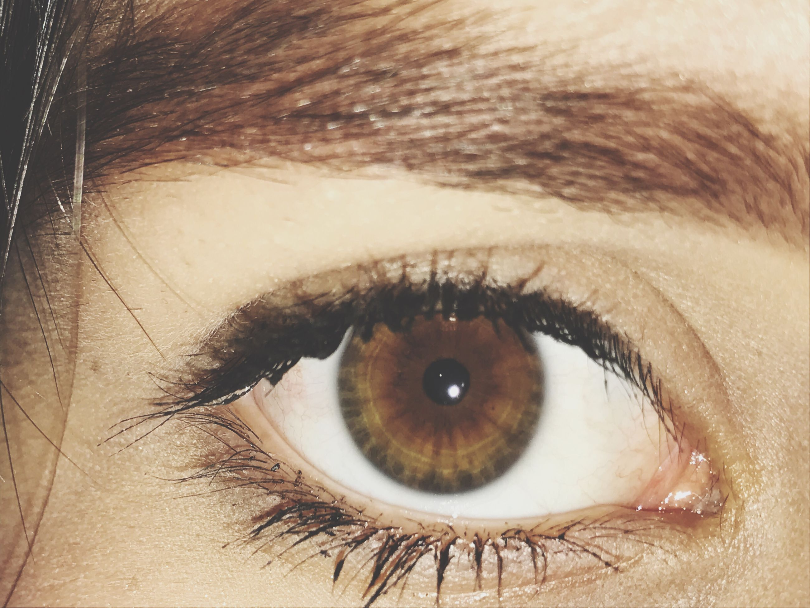 human eye, eyelash, real people, close-up, sensory perception, one person, human body part, looking at camera, backgrounds, eyesight, eyeball, full frame, portrait, beautiful woman, young adult, eyebrow, vision, people, outdoors, day, adults only, adult