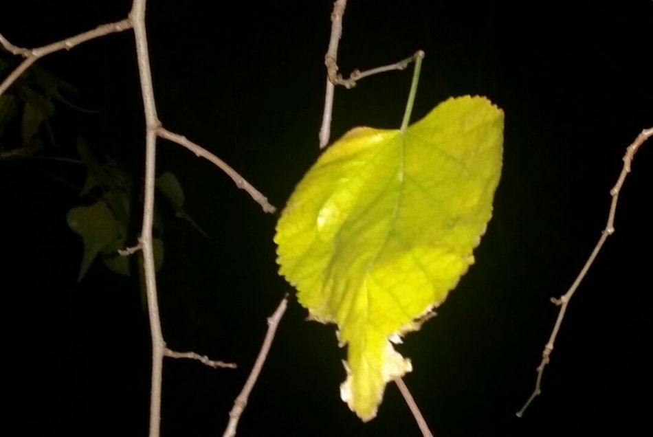 Pattern Pieces Shapes In Nature  Standing Alone Darkness And Beauty Darkness Also Iluminates Tree Winter Getting Inspired They All Yellow Leaf