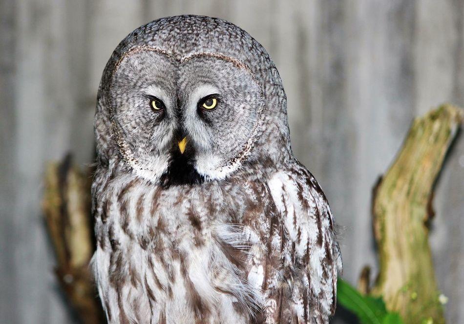 Beautiful stock photos of eule, Animal Eye, Animal Markings, Animal Themes, Animal Wildlife
