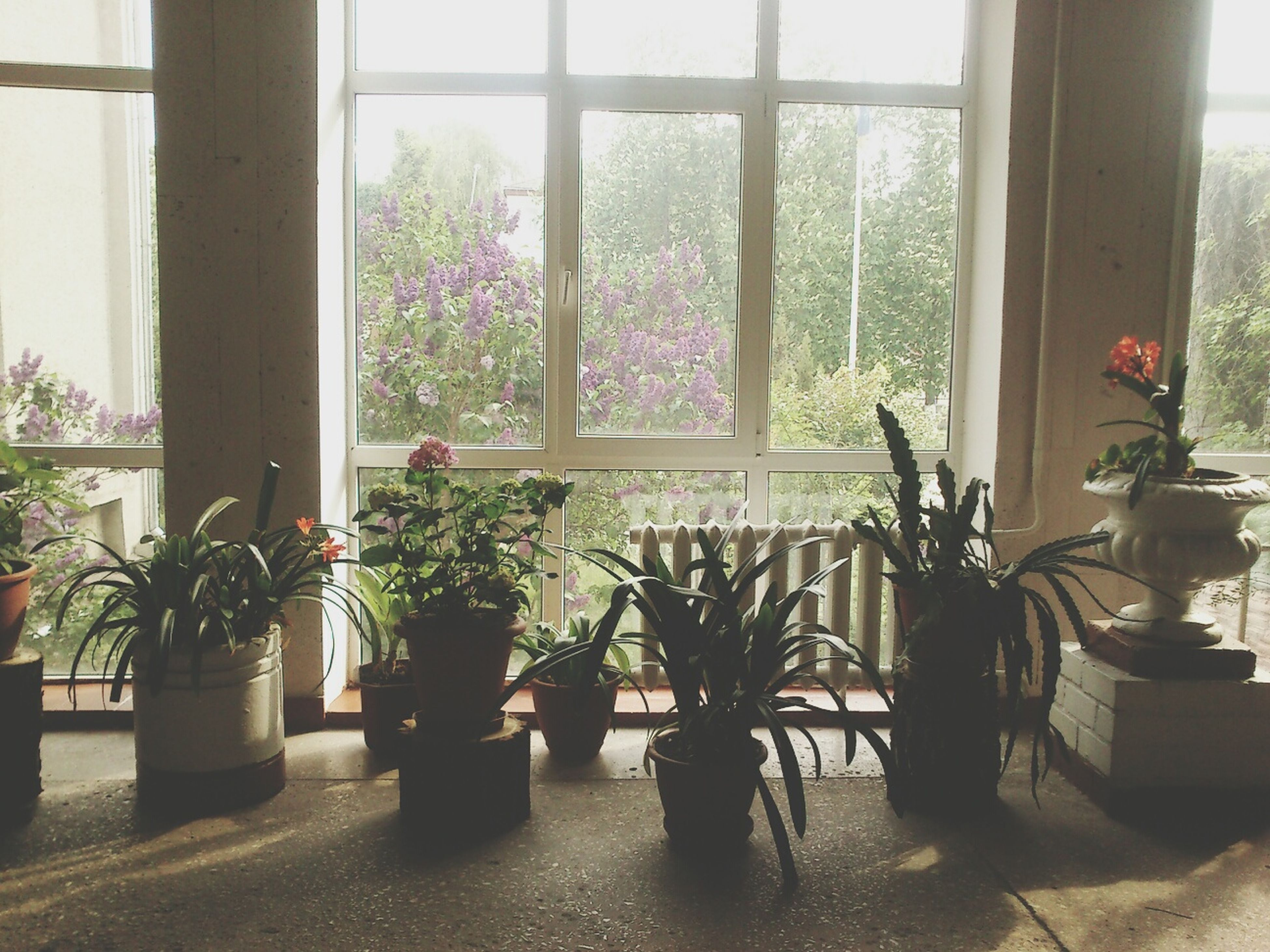 potted plant, indoors, window, plant, flower, growth, window sill, built structure, glass - material, architecture, flower pot, vase, table, house, home interior, transparent, door, sunlight, day, pot plant