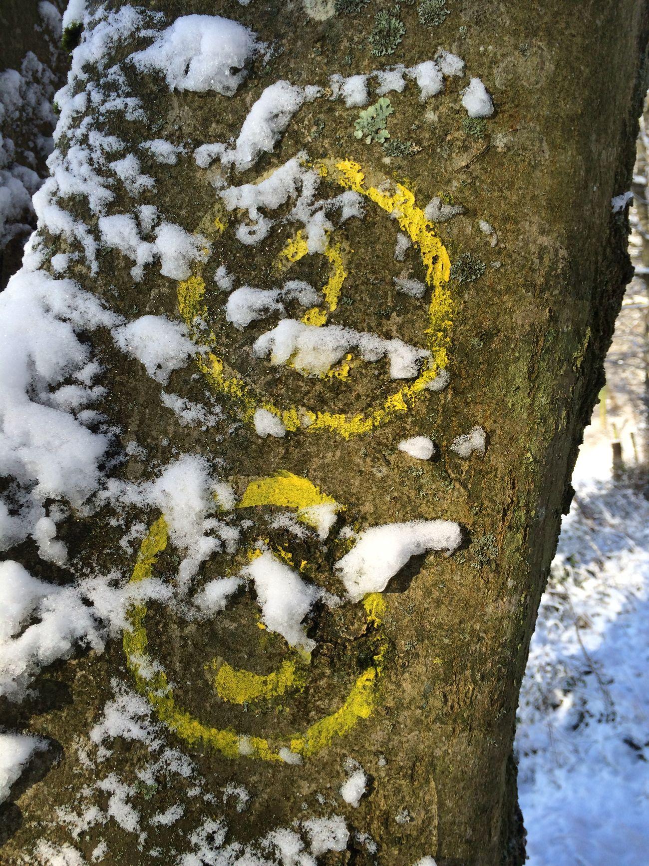Have A Walk Snow Odenwald