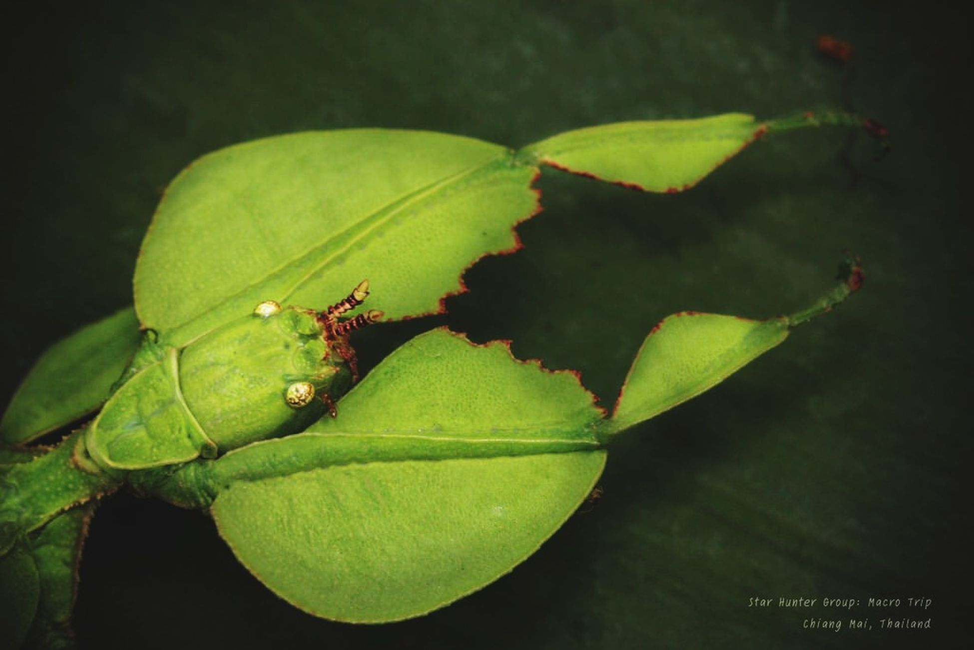 Insect Leaf Insects  Nature EyeEm Nature Lover Closeup Macro Macro Photography
