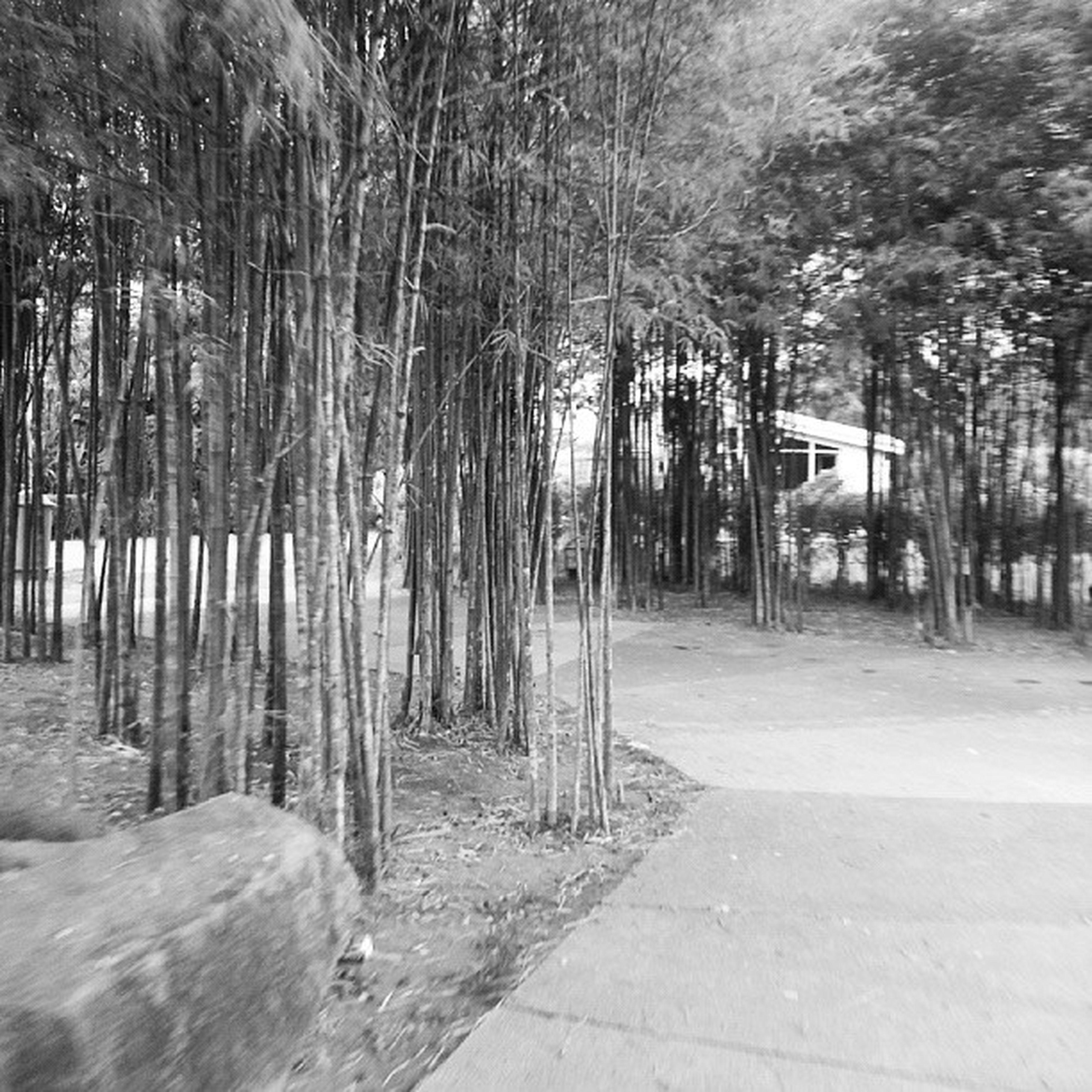 Perjalanan di celah pohon bambu Tajuklagubaru