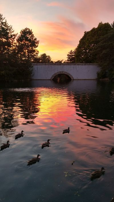 Sunset Water Pond Reflections Ducks In Water Evening Sky Sunset Silhouettes Crimson Sky Bridge Over Water Nature Sunset_collection Water_collection EyeEm Best Shots Check This Out Washington State The Great Outdoors - 2017 EyeEm Awards