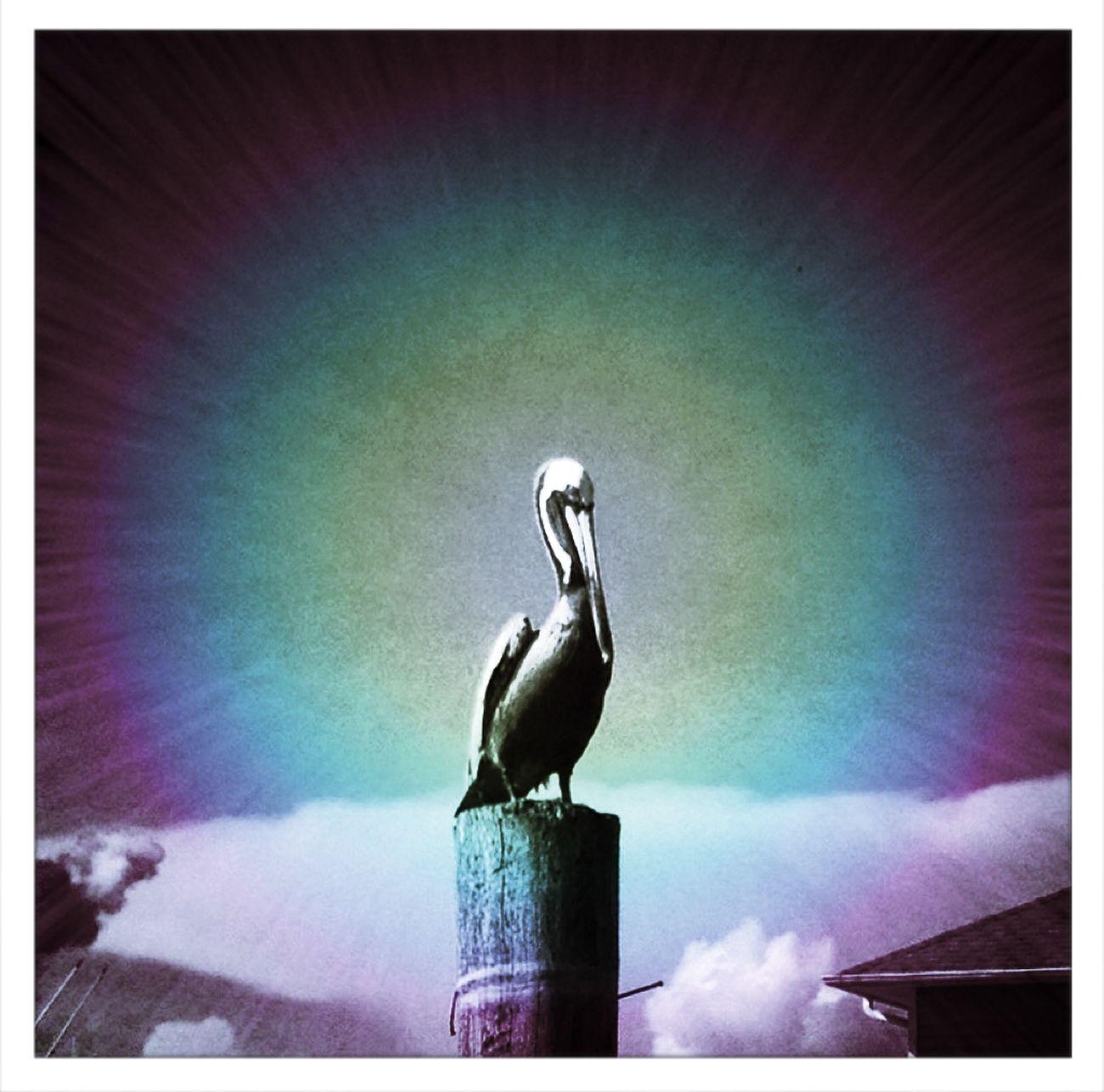 Pelican Tadaa Community