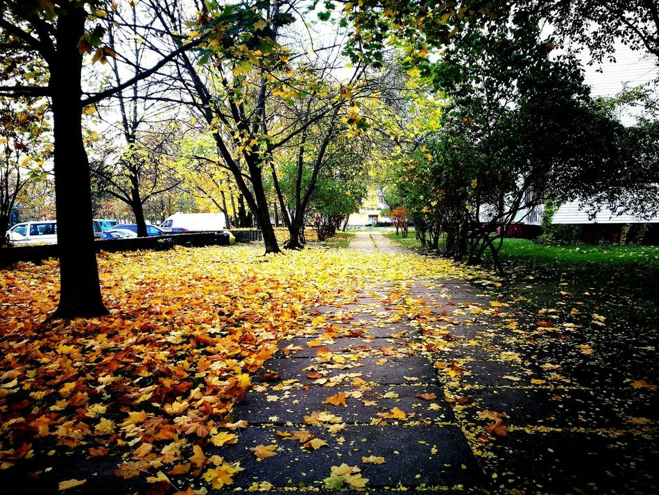 First Eyeem Photo Daylight Urban Landscape Urban Photography Urban Road 🌲 Tree Nature Winter Day Outdoors Beauty In Nature Autumn Autumn Colors Autumn Leaves Autumn🍁🍁🍁 No People Cold Temperature Freshness Daylight Photography Daylight , Tree Leaf Tranquility Scenics Tranquil Scene Tree Trunk The Way Forward Fragility Change Fallen