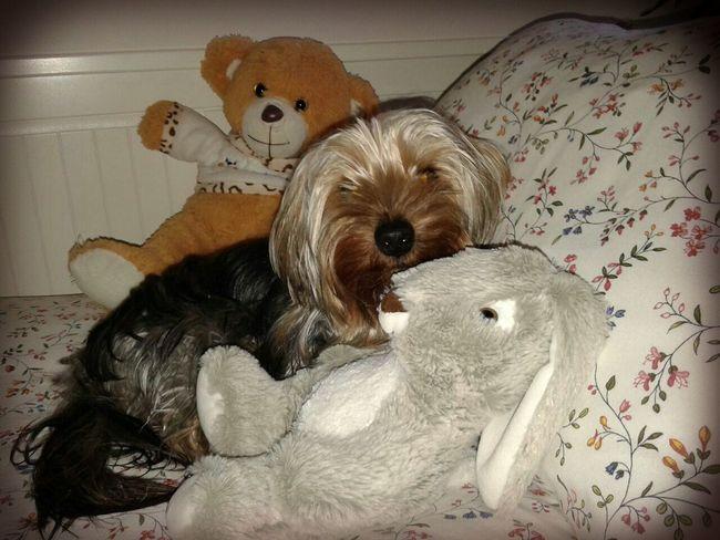 Camouflaged Eye4photography  Dog Pets Photography