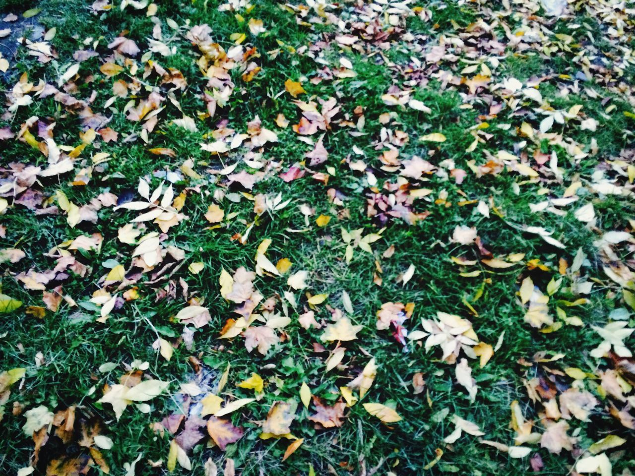 leaf, nature, leaves, growth, day, outdoors, autumn, fallen, change, no people, green color, field, beauty in nature, fragility, close-up, freshness