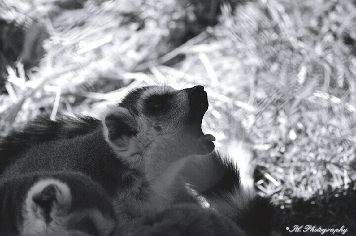 Holiday Baby Travel Hanging Out Zoo Animals  Morning Zoo Wildlife Hello World Global_hotshotz