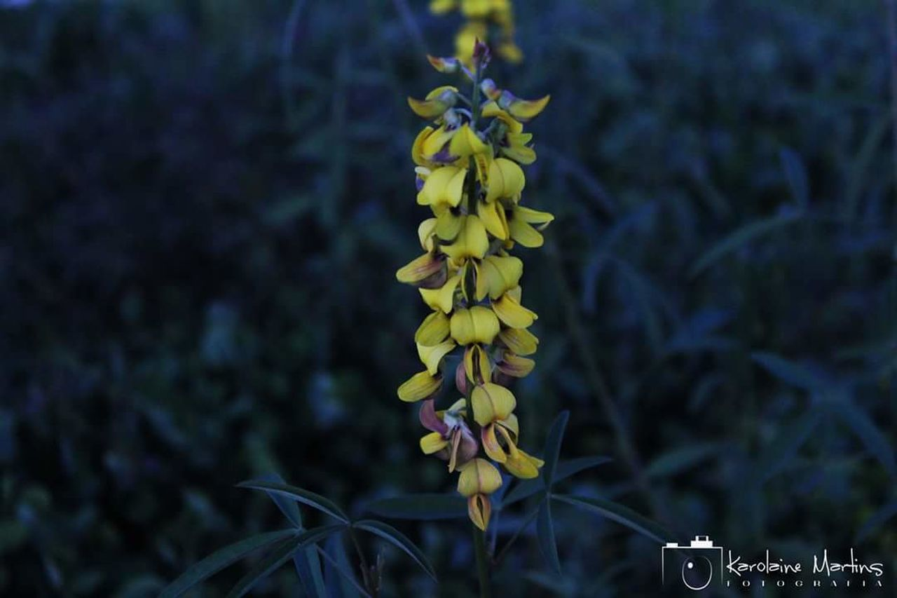 growth, nature, plant, beauty in nature, yellow, flower, outdoors, no people, fragility, freshness, close-up, day, flower head