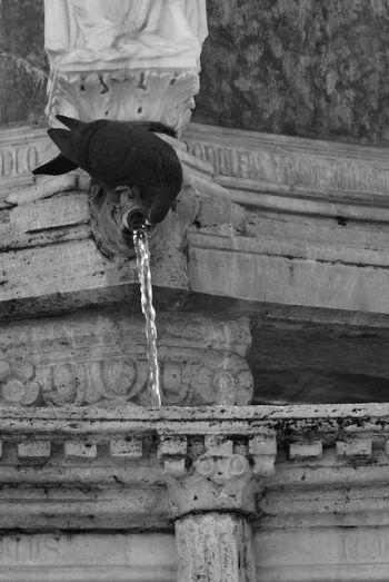 ♧ Photography Photo Followme Perugia Italy Nikon Nikonphotography