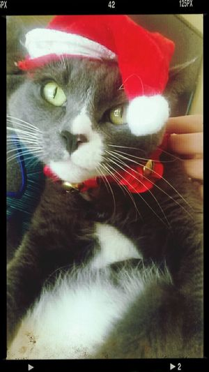 """Stormy says """"Merry F*cking Christmas."""" How You Like Me Meow?"""