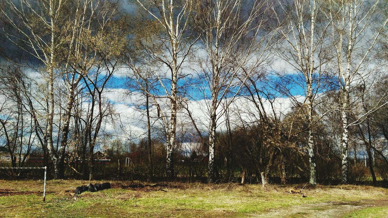 tree, nature, no people, tranquility, bare tree, beauty in nature, grass, day, scenics, outdoors, branch, forest, landscape, sky