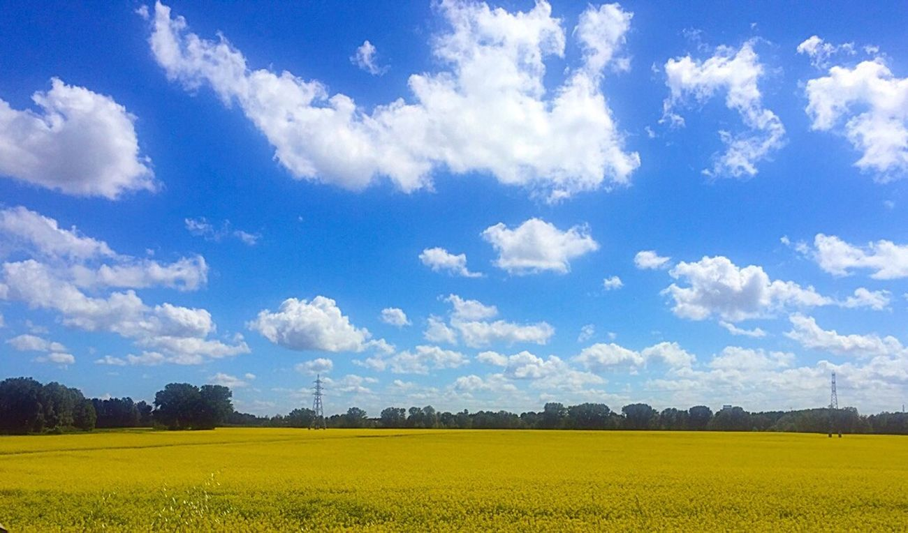 Hello Yellow! Colour Of Life Colour Yellow Helloyellow Sky Bluesky Clouds Hellospring Spring2017 Springmood 2017 Nature Naturebeauty Cloud - Sky Flower No People Life In Colors Rural Scene View 3XSPUnity Enjoythelittlethings WeLoveNature  EyeEm Gallery EyeEm Nature Lover