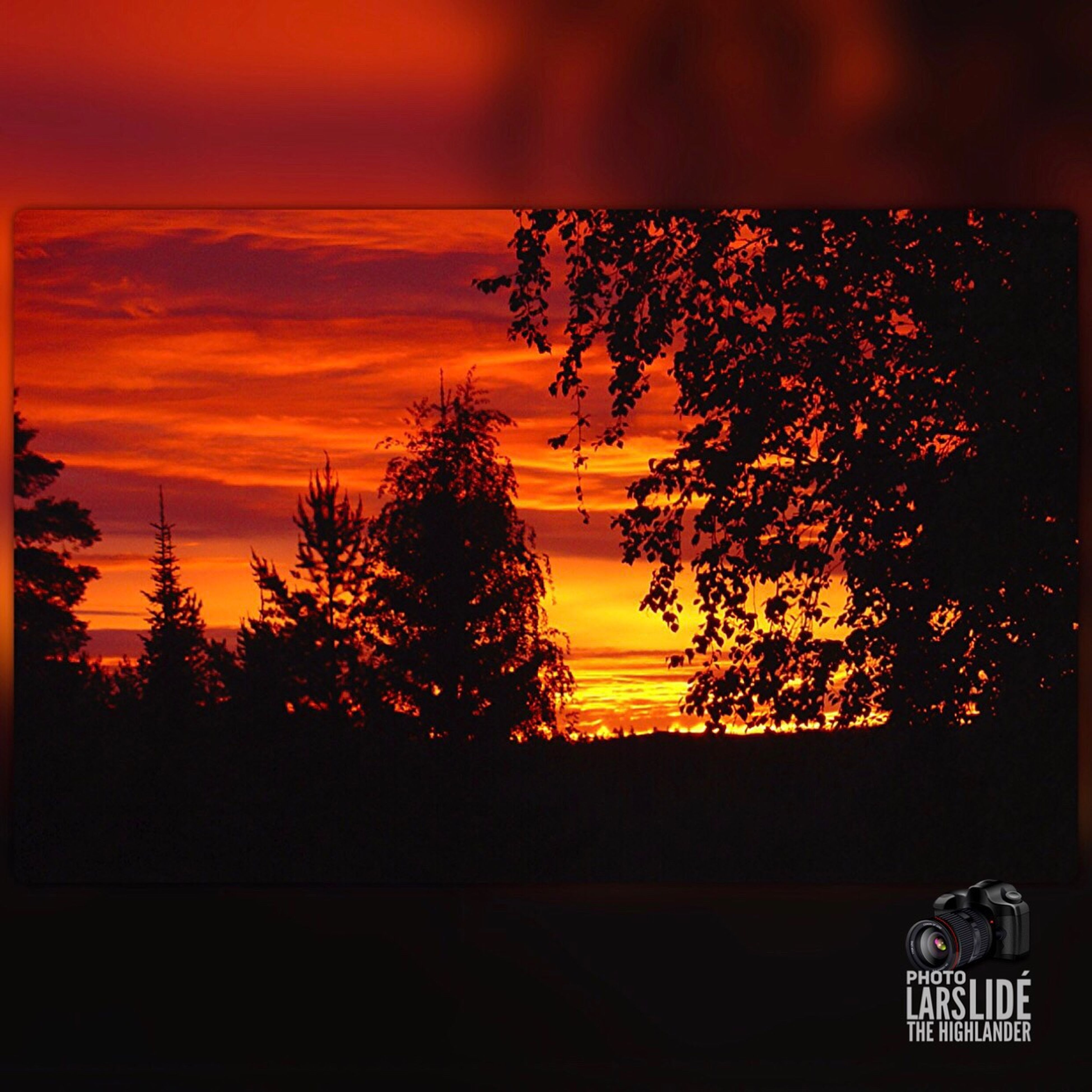 sunset, tree, orange color, nature, beauty in nature, no people, sky, silhouette, outdoors, scenics, cloud - sky, day