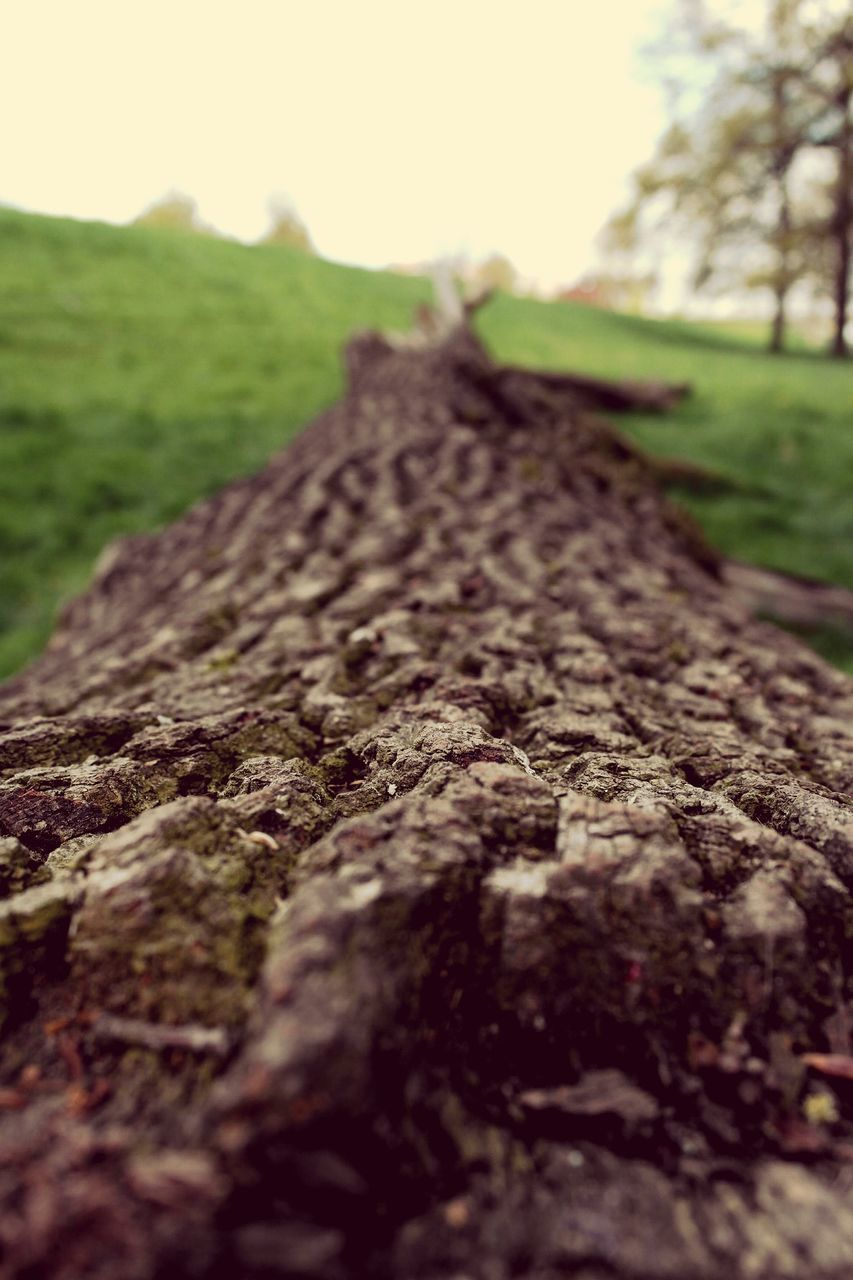 selective focus, outdoors, no people, nature, close-up, day, landscape, tree, sky