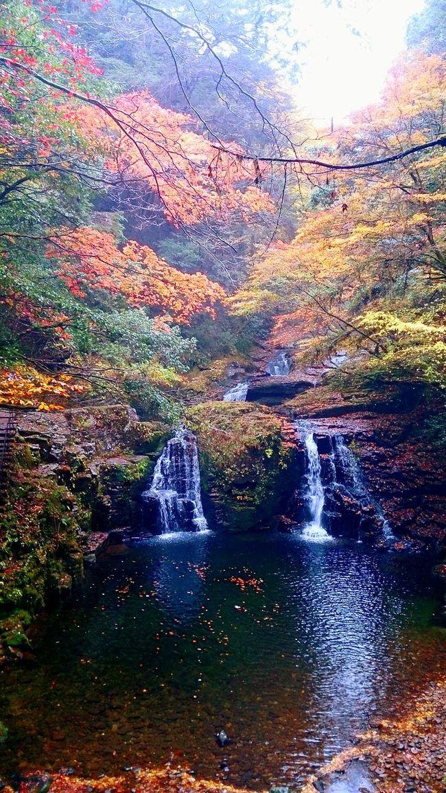 Taking Photos Glitch Fall Beauty Relaxing Enjoying Life