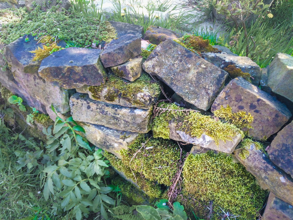 Close-up Day Garden Wall Growing Growth Moss Natural Nature No People Plant Rock - Object Stone - Object Tranquility Twisting