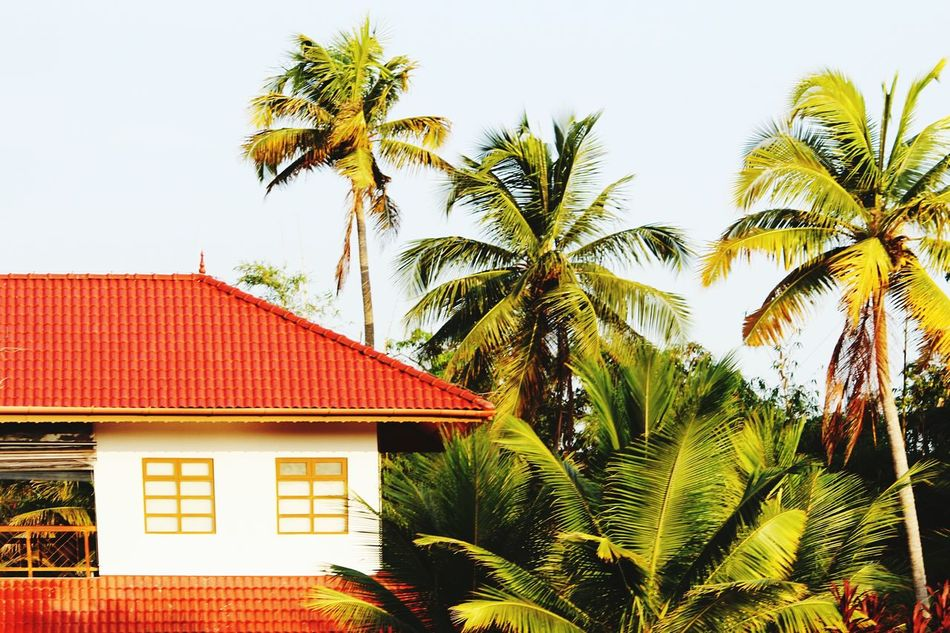 Coconut Trees Tree House Building Exterior Red No People Roof Built Structure Architecture Day Outdoors Sky Nature As I Saw It As I Want It Kerala_trip Kerala The Gods Own Country ;) Kerala Backwaters Houses And Windows House And Trees