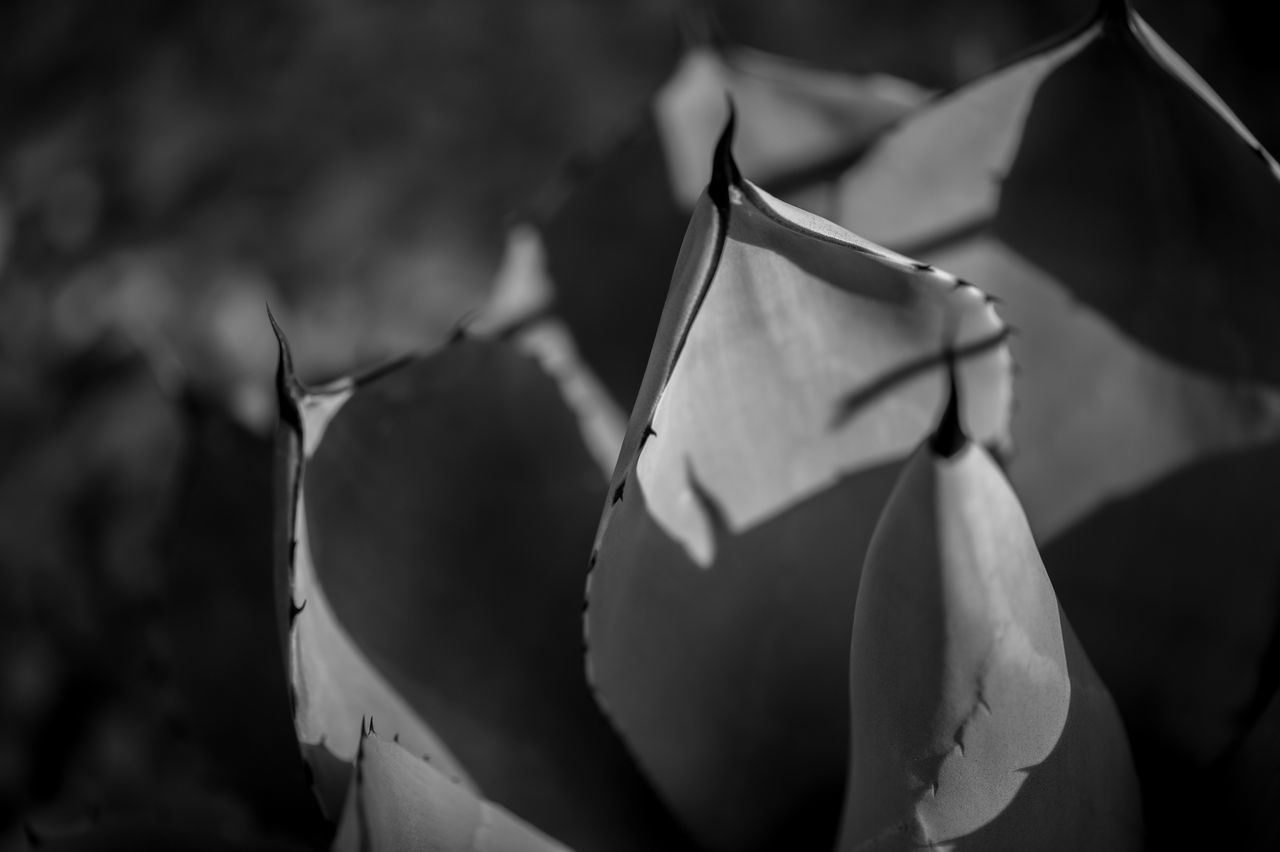 ©Amy Boyle Photography Cactus Close-up Day Dessert Focus On Foreground No People Outdoors Plant Plants And Flowers