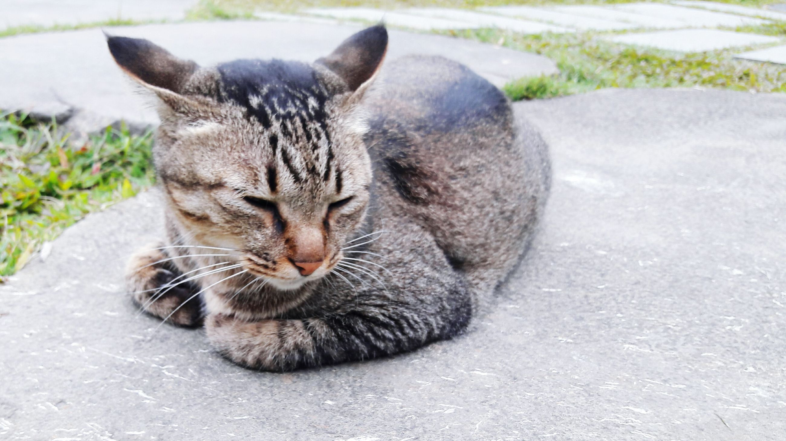 animal themes, one animal, mammal, domestic animals, domestic cat, pets, cat, feline, relaxation, whisker, lying down, sleeping, resting, street, two animals, full length, eyes closed, outdoors, close-up, sitting