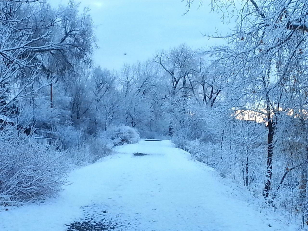 Winter morning Photography Colorado Trees_collection Snow Cold Weather Wintertime Winter Walking Path