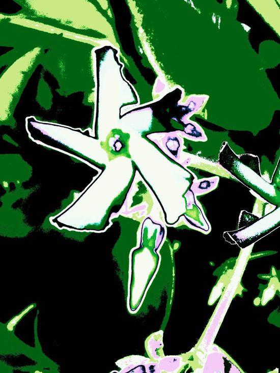 Jasmine Flower Collection Capture EyeEm Gallery Artanddesign  Naturedesigns