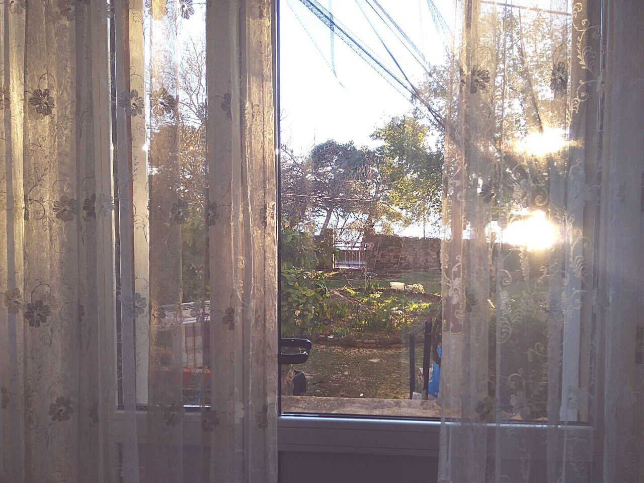 window, day, curtain, sunlight, no people, tree, indoors, drapes, nature, sky, close-up