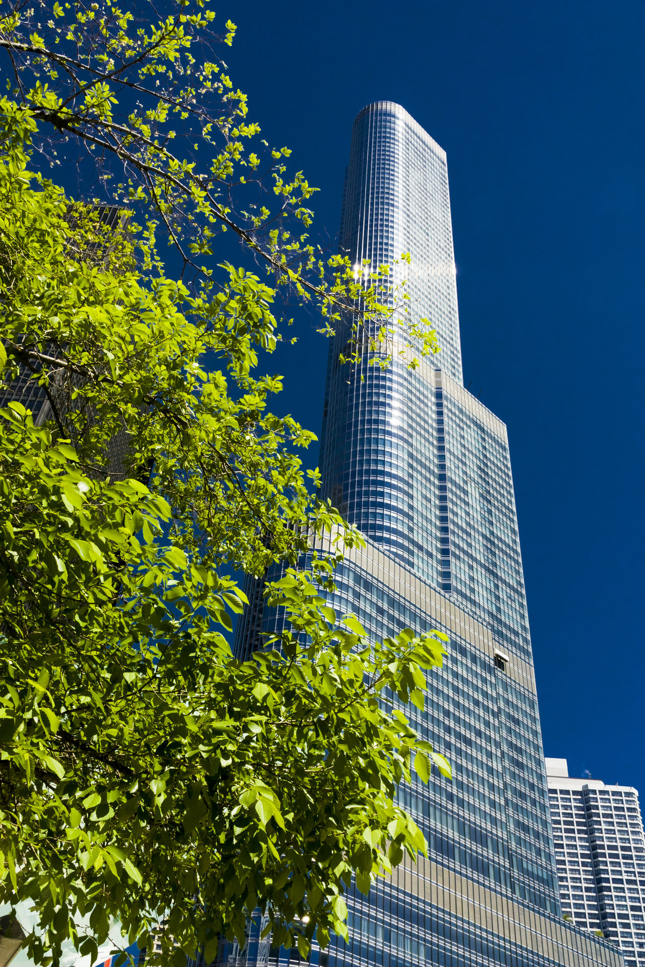 Architecture Chicago Donald Trump Green Sky Springcolors Trump Trump Building Trump Tower