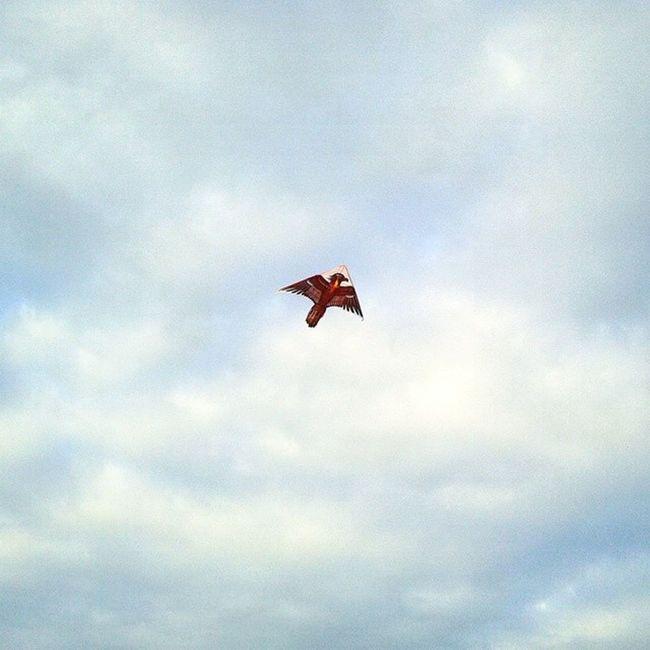 Aces High! Tags : ➡ Skies Kite Soarhigh blueskies beach aceshigh pixlr photospree