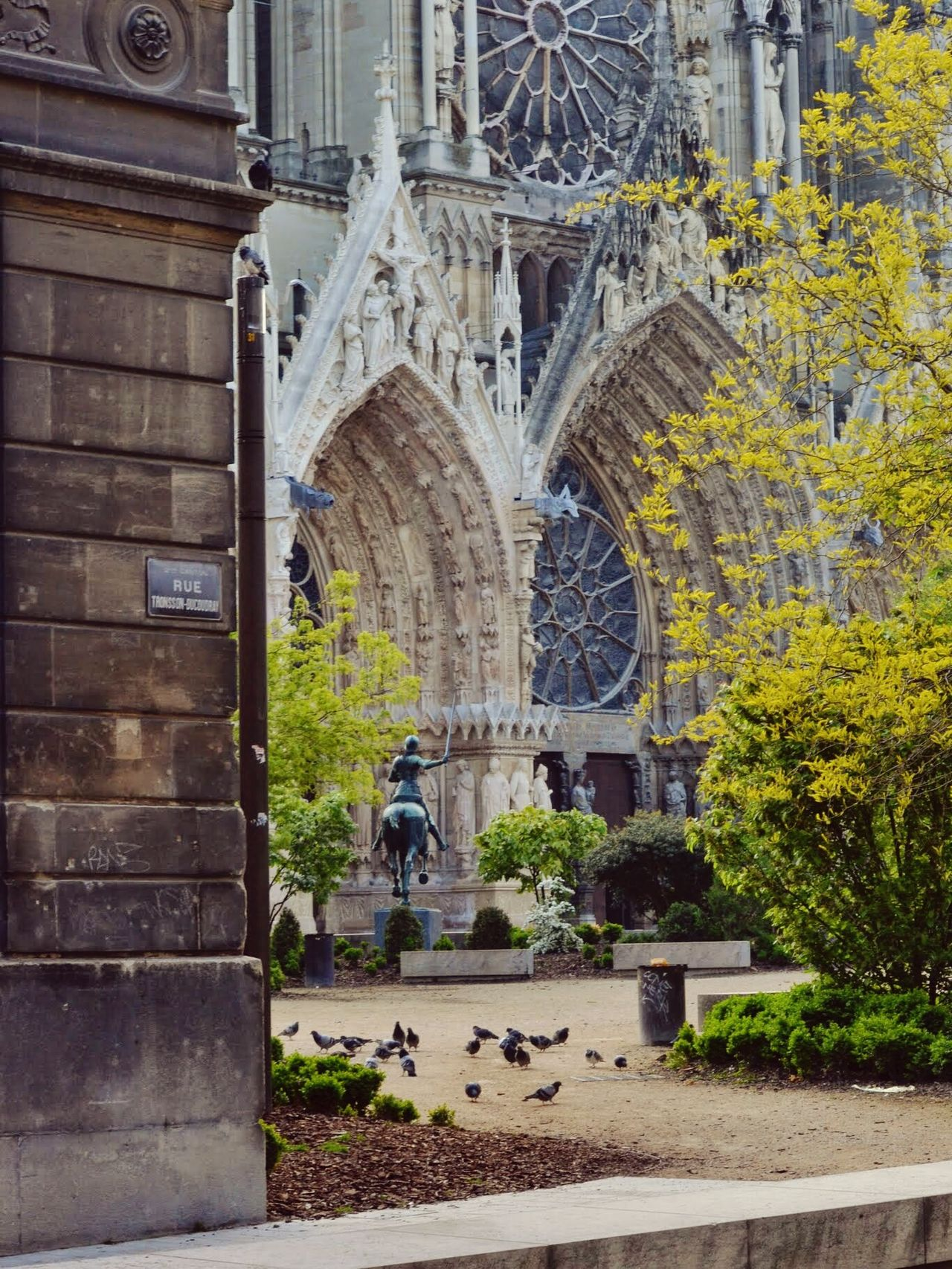 Birds in front of he Cathedral in Reims, Champagne - Reims Cathedral France - Open Square, Spring, France 🇫🇷