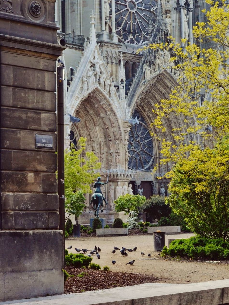 Birds in front of he Cathedral in Reims, Champagne - Reims Cathedral France - Open Square, Spring, France 🇫🇷 Church Open Space Catholic Church Cathedrale Gothic Style No People Springtime Pigeons No People Nature Architechture
