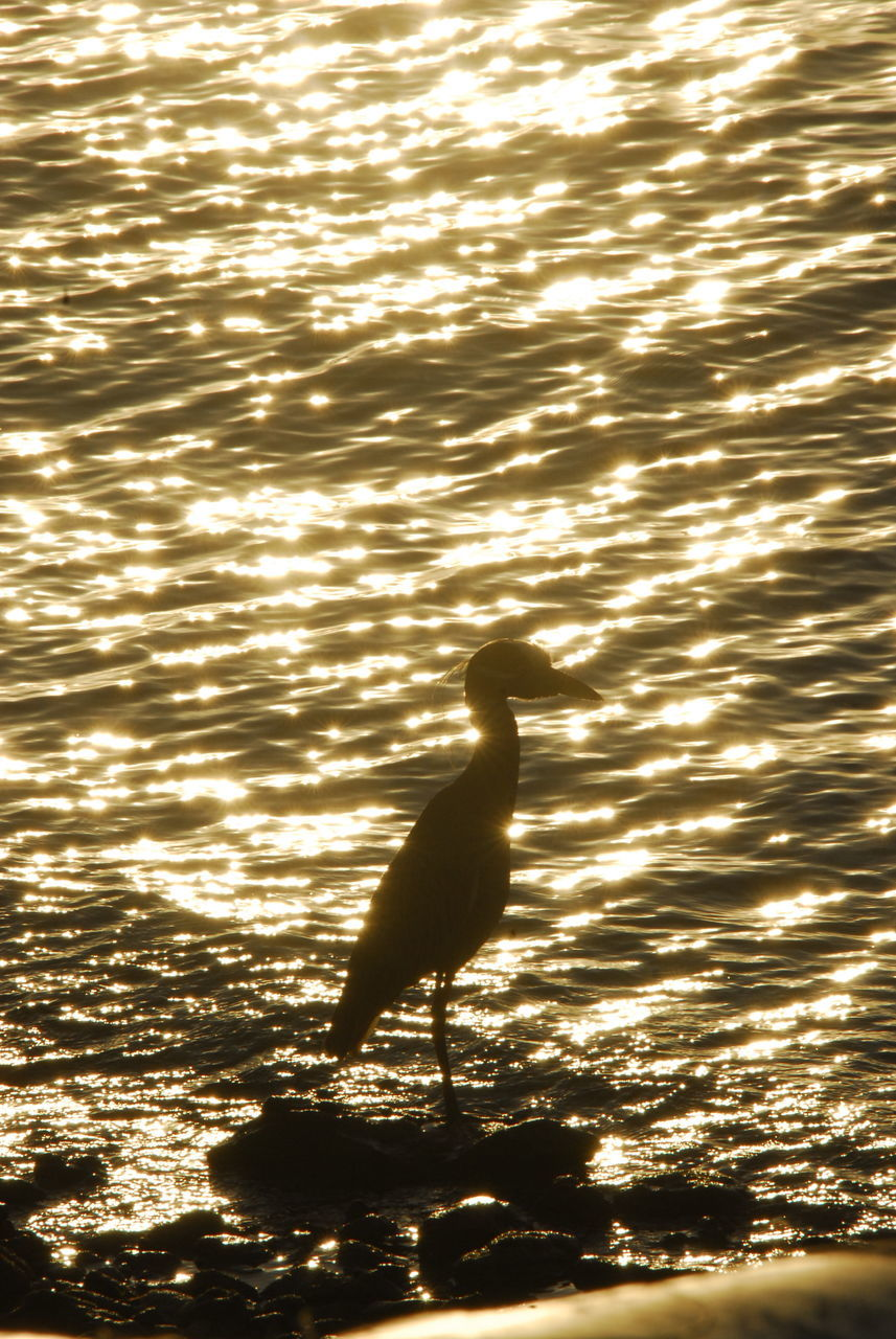 animal themes, water, animals in the wild, one animal, bird, nature, lake, sunlight, rippled, waterfront, no people, animal wildlife, sunset, silhouette, outdoors, beauty in nature, swimming, day, swan