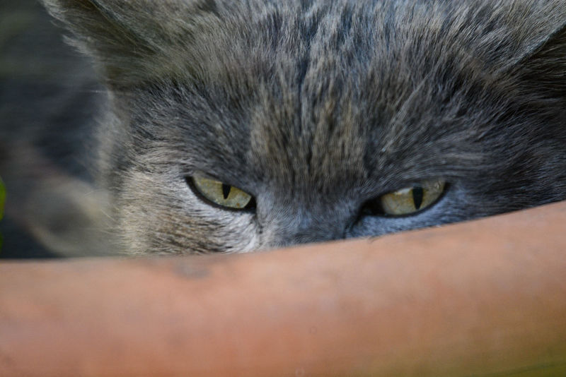 Animal Themes Cat Cat Eyes Cat Eyes Watching You Close-up Day Domestic Animals Domestic Cat Feline Friendship Human Body Part Mammal One Animal One Person Outdoors Pets Portrait Real People