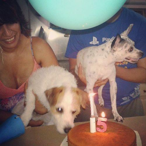 Noahs bday cake Noahpatricia Chihuahua Birthdaygirl Birthdaydog doglover instadog